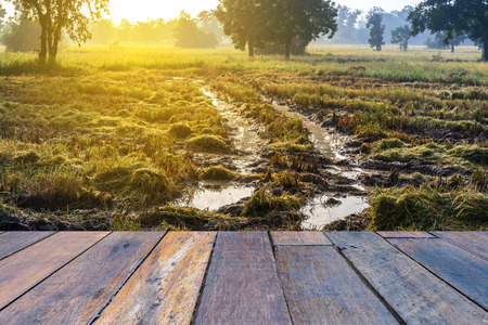 muddy tracks: Tractor harvester tracks in muddy rice field with wooden floor perspective. Stock Photo
