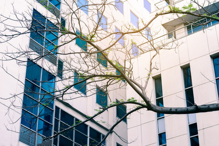 green building: Tree branch in front of office building, green building concept.