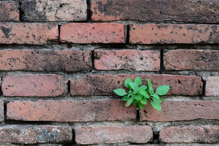 Plant growing on brick wall. Standard-Bild