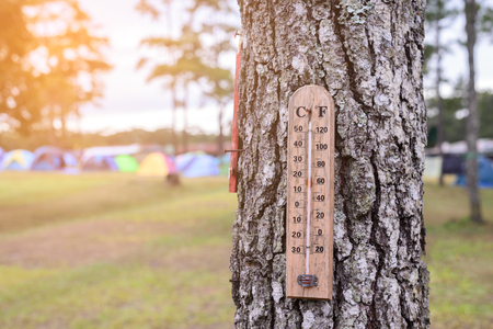 termometer: Wooden thermometer on the tree at camp site.