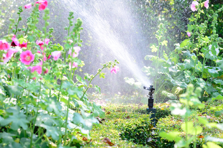 Garden water sprinkler system. Stock Photo