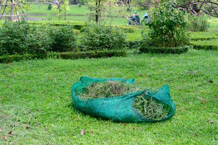 garden waste: Mowed grass garbage.