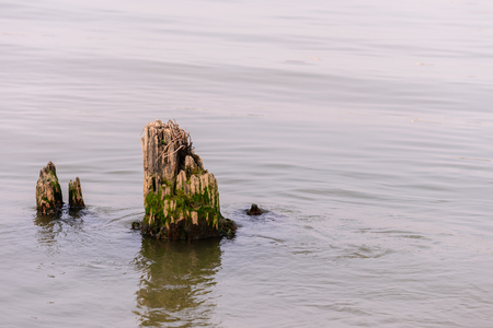 Old stump in river while low tide. Stock Photo