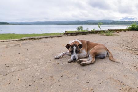 Domestic dog sleeping near lake.