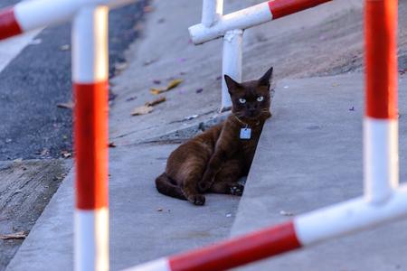Cat sitting on outside. Stock fotó
