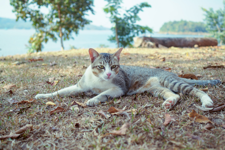 Cat playing outside at sunset time. Stock fotó