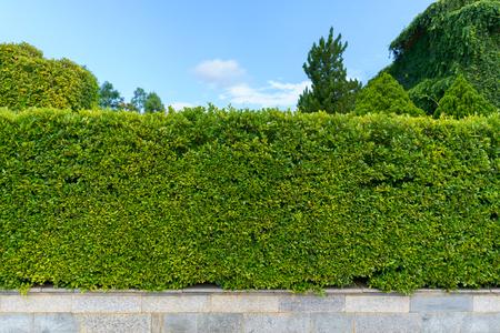 Tree fence wall and beautiful sky.