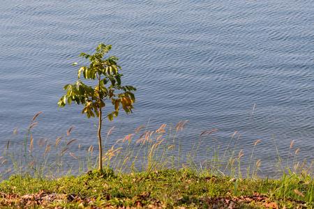 Beautiful tree at riverside.