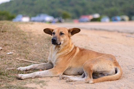 Thai domestic dog sleep on the floor.