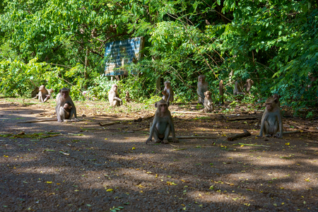 Family of monkeys in national park.