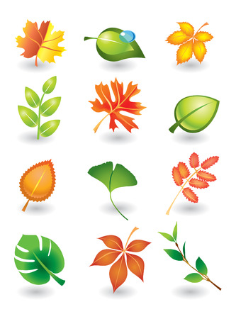 ashes: Vector set of autumn and summer leaves for design