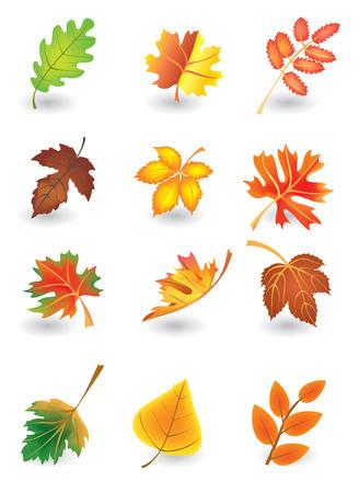 casta�as: Vector conjunto de hojas de oto�o para el dise�o de