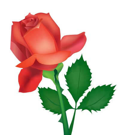 Beautiful vector rose for design Stock Vector - 6117340