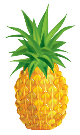 illustration of ripe pineapple