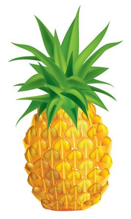pineapples: illustration of ripe pineapple