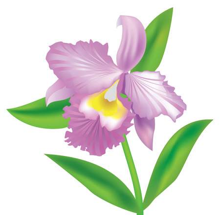 Beautiful  violet orchid for design Stock Vector - 6354778