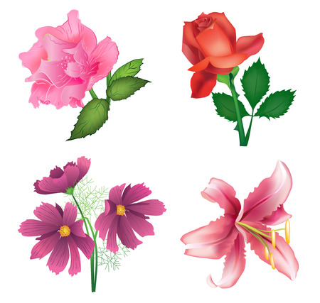 cosmos flower: Beautiful flowers for design - roses, lily and cosmos