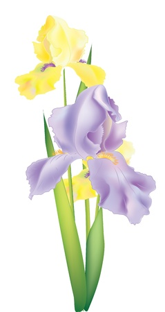 Illustration of three iris flowers for design Vector