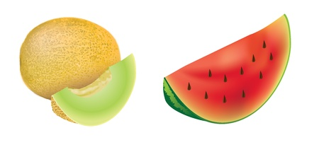 Melons, set of isolated, detailed illustrations and icons  Vector