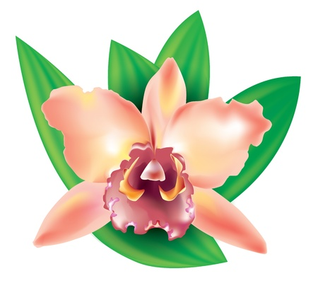 Beautiful flower orchid with leaves for design Vector