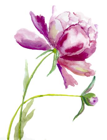 aquarelle: Aquarelle picture: flower  peone Illustration