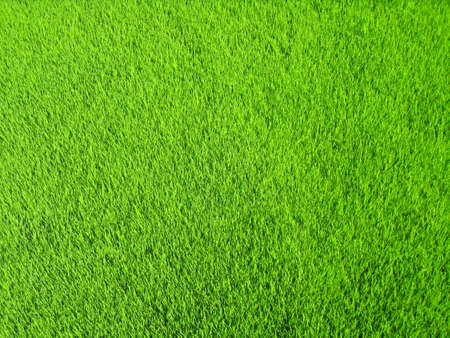 A healthy green grass background with texture.                               Stock Photo