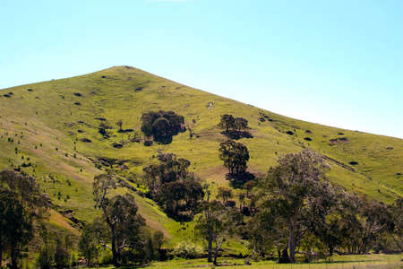 A green grass country hill with scattered trees on a blue sky background.