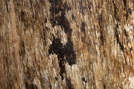 A close up shot of the bark texture on a wet tree  Stock Photo