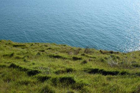 A lush field of wild grass along a calm coastline