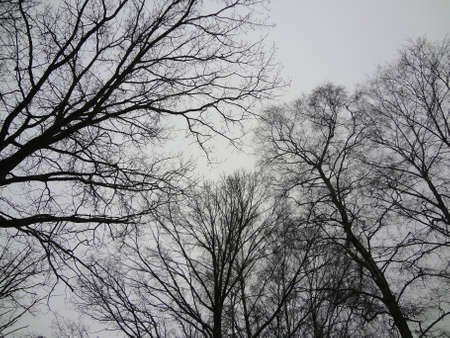 Winter trees in Stockholm on a white sky background                                 Stock Photo