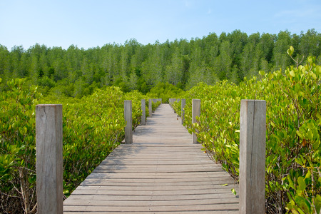 Wooden walkway bridge surrounded with Ceriops Tagal field in mangrove forest, it called Tung Prong Thong located at Rayong, Thailand. Stock Photo
