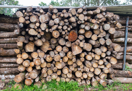 pile of logs: Pile of logs for wood texture background. Stock Photo