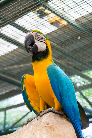 ara: Bottom view of Blue-and-yellow macaw or Ara ararauna.