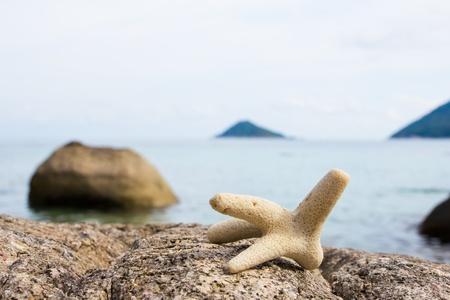Coral on rock closeup
