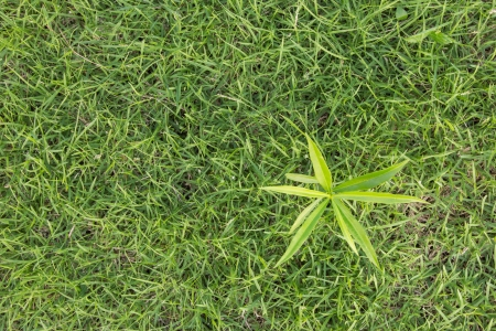 Top view sprout on grass  Stock Photo