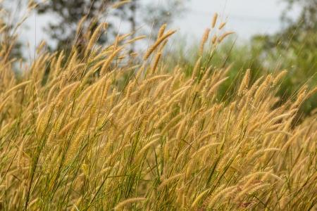 Meadow in the wind