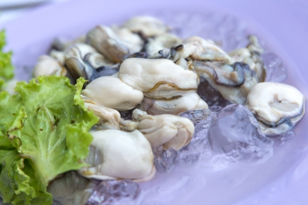 Fresh oysters ready to serve