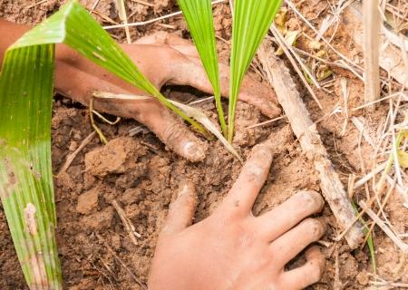 plantando un arbol: Manos que plantan un �rbol Foto de archivo