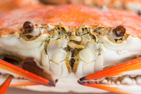 Macro steamed crab on dish  Stock Photo