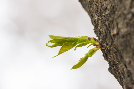 Green sprout growing from tree in horizontal Stock Photo