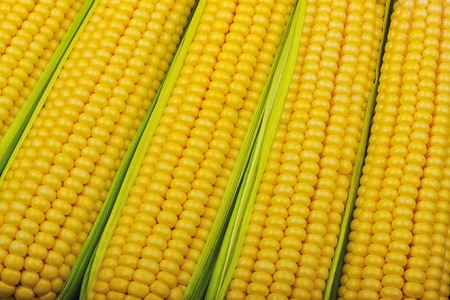 fresh corncob between green leaves close up Stock Photo