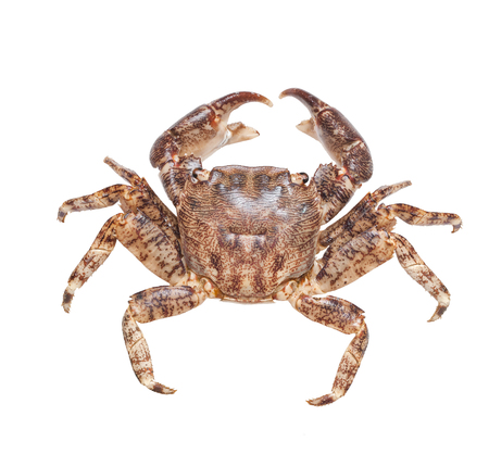Crab isolated on white,macro shot