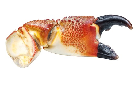 red  crab  claw  isolated on white,macro photo Reklamní fotografie
