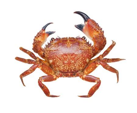 Crab isolated on white,macro shot