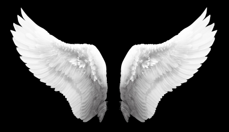 angels: White angel wing in black color background Stock Photo