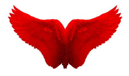 bird wings: Red Wing