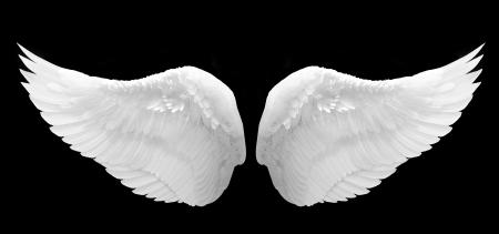 alas de angel: White Wing