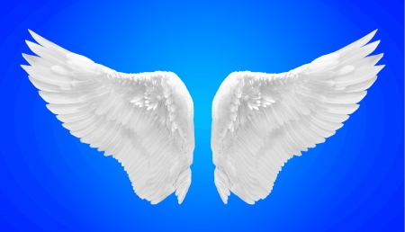 white angel wing isolated photo