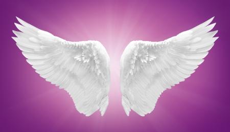 ali angelo: angelo bianco ala isolato Archivio Fotografico