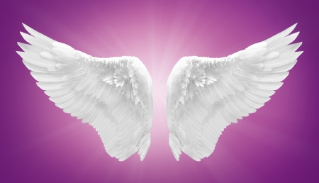 white angel wing isolated